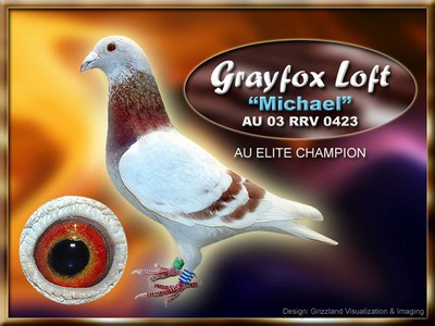 Gray Fox Harms Racing Pigeon Elite